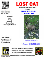 CASH REWARD Lost Cat - Rescue
