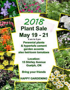 Perennial Plants and Heirloom Tomato Seedlings