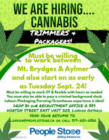 Cannabis Packagers and General Labourers Needed