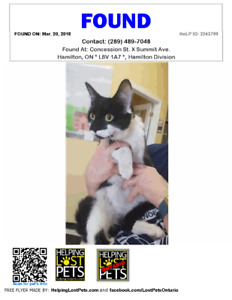 Black/White Young Cat Found - Concession Street Area