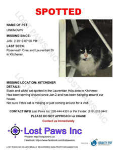 FOUND CAT - IS THIS YOUR KITTY?