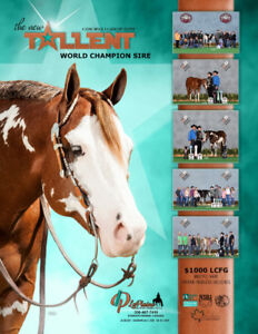 The New Talent Stallion breeding right for sale.