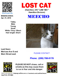 LOST CAT - MALE, GRAY/WHITE, YOUNG