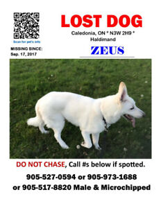Zeus - Lost Male Dog - White German Shepherd