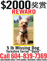 **$2000 REWARD for MISSING 5 LB DOG (YORKIE)