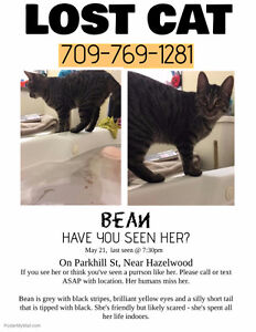 LOST CAT: Bean, Parkhill St