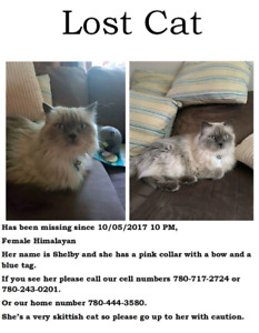 Missing Cat *REWARD*