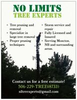 Tree Pruning and Removal for Moncton, NB