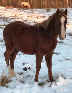 Beautiful Foals Edmonton Edmonton Area image 1