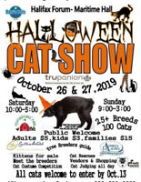 If you are a VENDOR and like KITTIES, we want you to join us !
