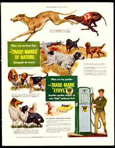 Large 1949 dog breed ad for Ethyl Corporation