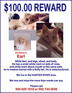 $100.00 Reward Lost Cat