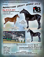 Maritime Draft Horse Sale
