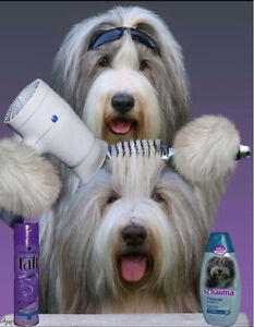 Professional All-Breed Dog Grooming