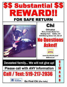 Lost family member Chi. $$SUBSTANTIAL REWARD$$