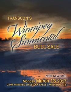 Vente aux enchères Transcon de taureau Simmental à Winnipeg