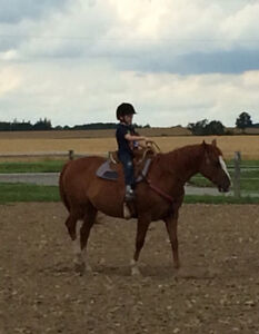Western/English riding lessons. NEW now Dressage, Hunters