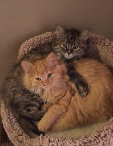5 month old kittens for sale