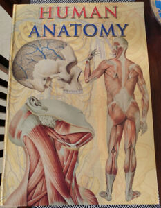 Book, Giant Book Human Anatomy 24x17in 160pages ONLY $25