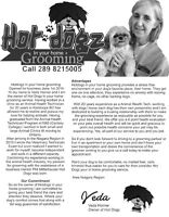 Hot Dogz In Your Home Grooming