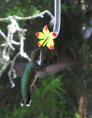 Hummingbird feeder tube (SM) set of 10