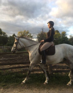 Experienced rider looking to help at a local barn/horse farm