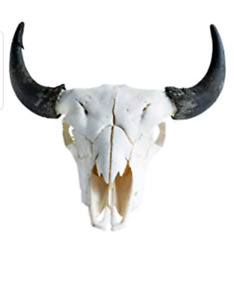 Buffalo skull decor