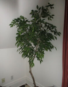 Lovely Artificial Ficus Tree
