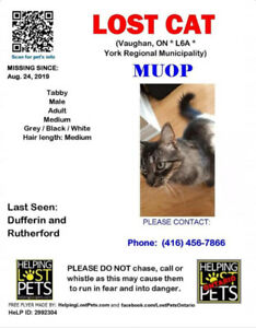 Lost Cat in Vaughan, ON