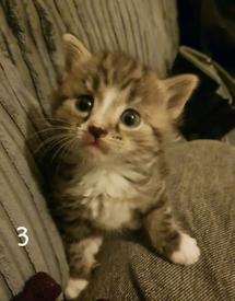 4 kittens (read description)