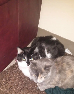 2 cats for sale