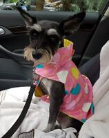 Pet Taxi & Dog Taxi & Cat Taxi - Richmond Hill, Thornhill Area