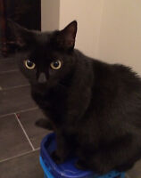 FREE affectionate cat needs a new home