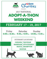 Vaughan Cat Adoption Event (THIS WEEKEND ONLY)