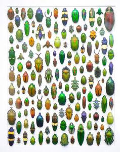 encadrement mosaique de vrais insectes au couleur métallique