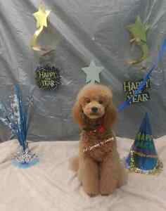 January Special ! Professional dog and cat grooming  Cambridge Kitchener Area image 2
