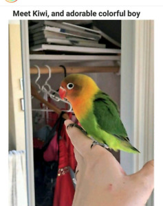 Bird sitting  from home AVAIABLE 24/7 from $10/Day brampton GTA