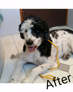 Pampered Paws Home Spa! Full Service Pet Grooming!