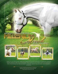 Early bird breeding fee discount on Millenium Miracle