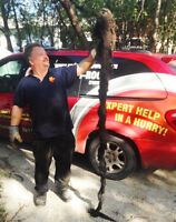 Sewer & Drain Cleaning Specialists Save $$ Free Quote + Warranty