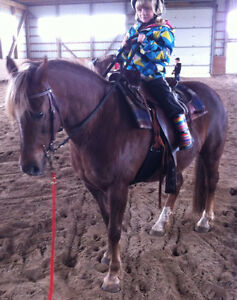 NEW FOREST PONY to sell! Kitchener / Waterloo Kitchener Area image 3