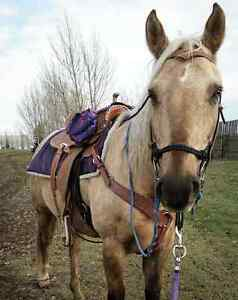 2005 QH Gelding for Sale or Trade