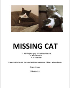 Missing Grey and white male cat named Eddie Richmond bc
