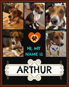 I'M ARTHUR, I WOULD LIKE A LOVING FOSTER/FOREVER HOME