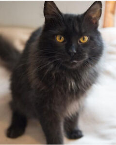 Male cat to good home
