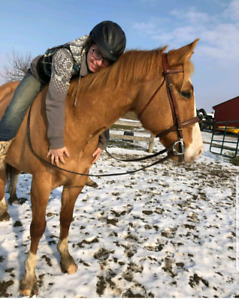 Trail horse for sale