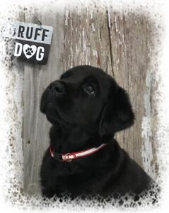 Labs Or Retrievers | Adopt Dogs & Puppies Locally in Ontario