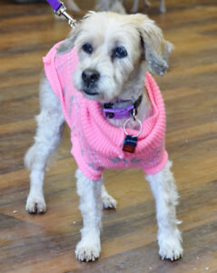 **ADOPT Brandy - TERRIER cross is available for adoption***