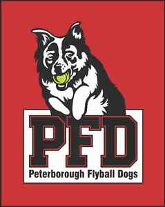 Peterborough Flyball Dogs Accepting Applications