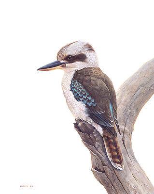 kookaburra-music-shop2012